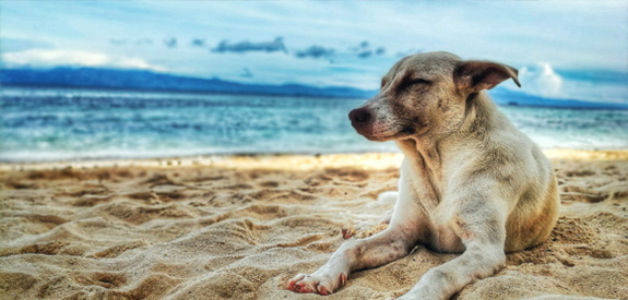 8 Tips for a Dog-Friendly Beach Vacation