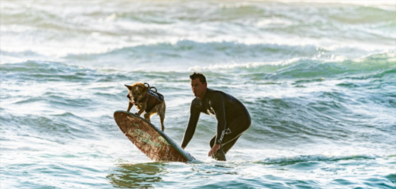 Dog Surfing 101: Surf Schools That Teach Fido to Hang Ten